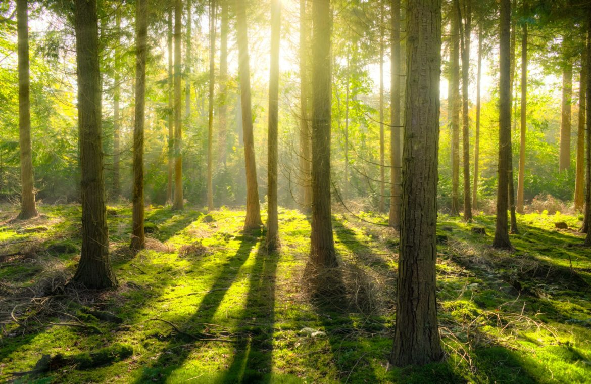 Customer experience: don't lose sight of the forest for the trees!